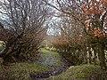 Old Track on Bargane Hill - geograph.org.uk - 127514.jpg