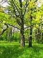 Oleksandria Park (May 2019) 3.jpg