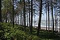 Olympic NP Coastline (145370304).jpg