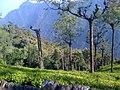 Ooty, The Nilgiris - panoramio.jpg