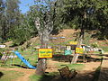 Ooty view in januvary 2013 by irvin calicut (34).JPG