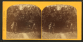 Orange grove, St. Augustine, Fla, from Robert N. Dennis collection of stereoscopic views.png