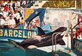 Orca ulisses en el Zoo de Barcelona.jpg