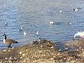 Orléans - oiseaux de Loire.jpg