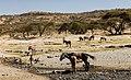 Oromia IMG 5565 Ethiopia (25929529738).jpg
