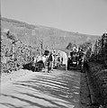 Ossenkar met oogstkuipen en tractor met druivenplukkers op de wijnberg, Bestanddeelnr 254-4192.jpg