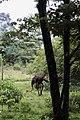 Ostrich, Nairobi National Park.jpg