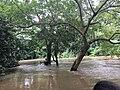 Osun river.jpg