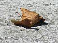 Outono - Folla seca.jpg