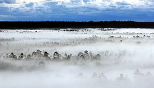 Flag of Estonia - Early morning fog in the Põhja-Kõrvemaa Nature Reserve.