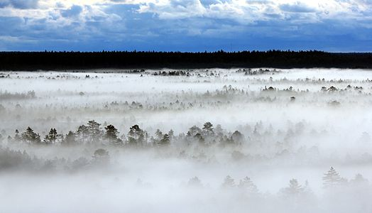 Morning in Põhja-Kõrvemaa Nature Reserve