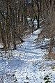 Pěšinka v listnatém lese - panoramio.jpg