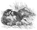 Page 31 illustration to Three hundred Aesop's fables (Townshend).png