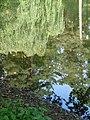 Palanga Botanical Park. Reflections. 2018(6).jpg