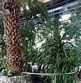 Palmiarnia Zielonogórska - środek13.jpg