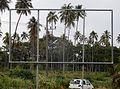 Palms in the Frame (31309932331).jpg