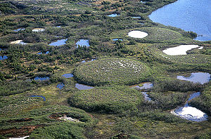 Palsa - A group of well developed palsas as seen from above