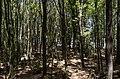 Paradise - panoramio (9).jpg