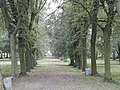 Park pałacowy - Aleksandrów Kuj 04.jpg