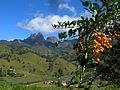Parque Dos Tres Picos - Fruta do Jacu.jpg