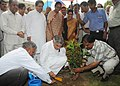 Pawan Kumar Bansal planting a sapling in the lawns of Parliament House, in New Delhi. The Speaker, Lok Sabha, Smt. Meira Kumar, the Leader of Opposition in Lok Sabha.jpg