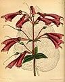 Paxton's flower garden (Plate 76) (9253404287).jpg