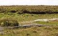 Peat bog and pool - geograph.org.uk - 487299.jpg