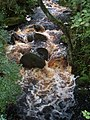 Peaty stream - geograph.org.uk - 1421147.jpg