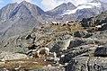 Pecore in Paradiso 8.jpg