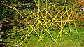 Pedro Meier Skulptur »Mikado in GELB«, in Ausstellung Franz Eggenschwiler Stiftung »Work in Progress« 2017. Skulpturengarten. Foto © Pedro Meier Multimedia Artist.jpg