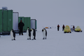Penguins at Camp Haskell.png