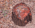 Petrified Wood (4478508648).jpg