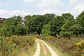 Pfad im Meinweg (freddy2001).jpg