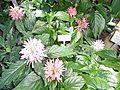 Pflanzen in den Gewächshäusern (10).jpg
