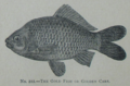 Picture Natural History - No 212 - The Gold Fish or Golden Carp.png