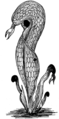 Pitcher Plant (PSF).png