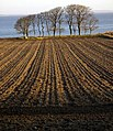 Ploughed Field - geograph.org.uk - 1275402.jpg