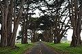 Point Reyes Cypress Tree, Point Reyes, USA (Unsplash).jpg