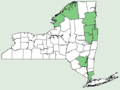 Polygonum douglasii NY-dist-map.png