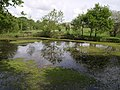 Pond on Hatherleigh Moor - geograph.org.uk - 439187.jpg