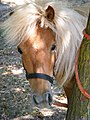 Pony snout, Lake Martignano, Lazio.jpg