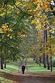 Pope's Meadow High Town Luton- avenue of trees November 2013.JPG