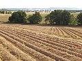Potato field, Balruddery - geograph.org.uk - 558437.jpg