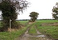 Public footpath to The Ling - geograph.org.uk - 1570481.jpg