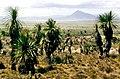 Puebla (estado) 1986 06.jpg