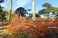 Puesco, otoño 2016 - Flickr - Pato Novoa.jpg