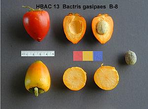 Bactris gasipaes - Image: Pupunha (Bactris gasipaes) 7