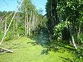 Pylkovka IMG 1182.jpg