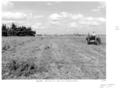 Queensland State Archives 4300 Bureau of Investigation irrigated pastures Gatton 1950.png
