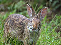 Rabbit edit.jpg
